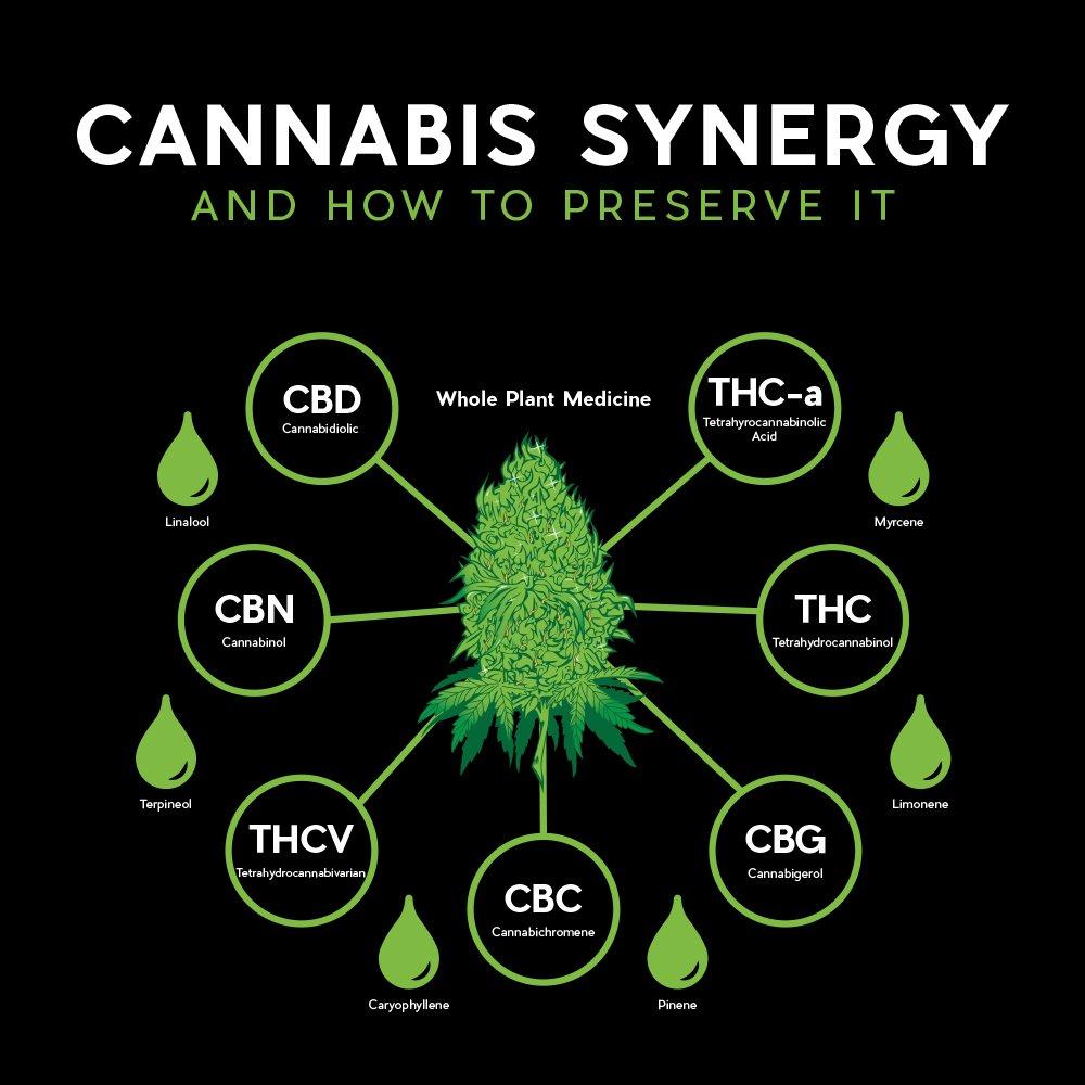 cannabis-synergy-whole-plant-medicine
